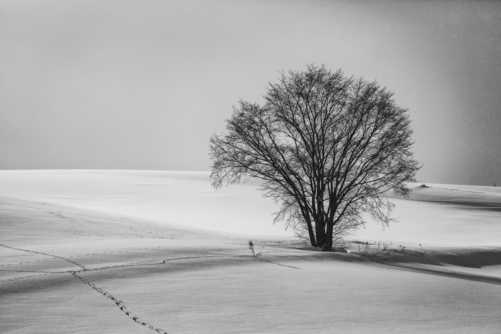 Biei Snowscapes Winter