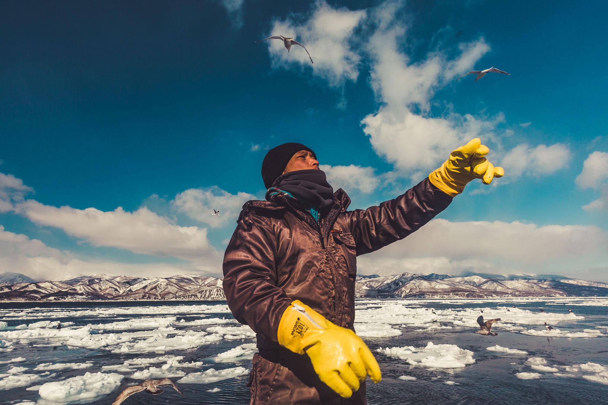 Feeding Sea Eagles
