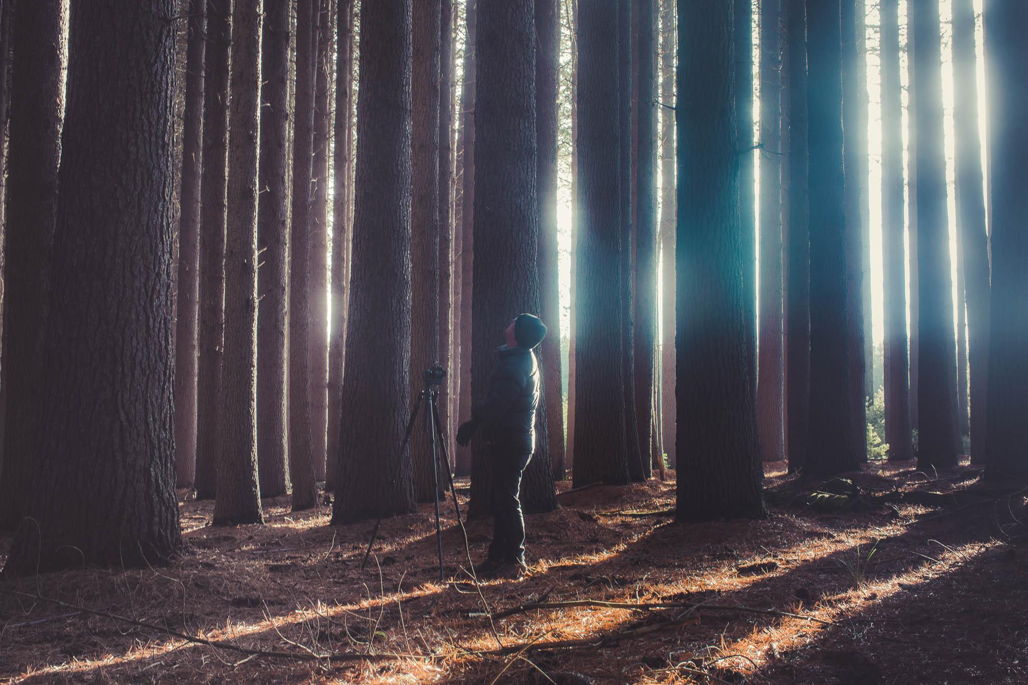 Sugar Pine Forest (8 of 11).jpg