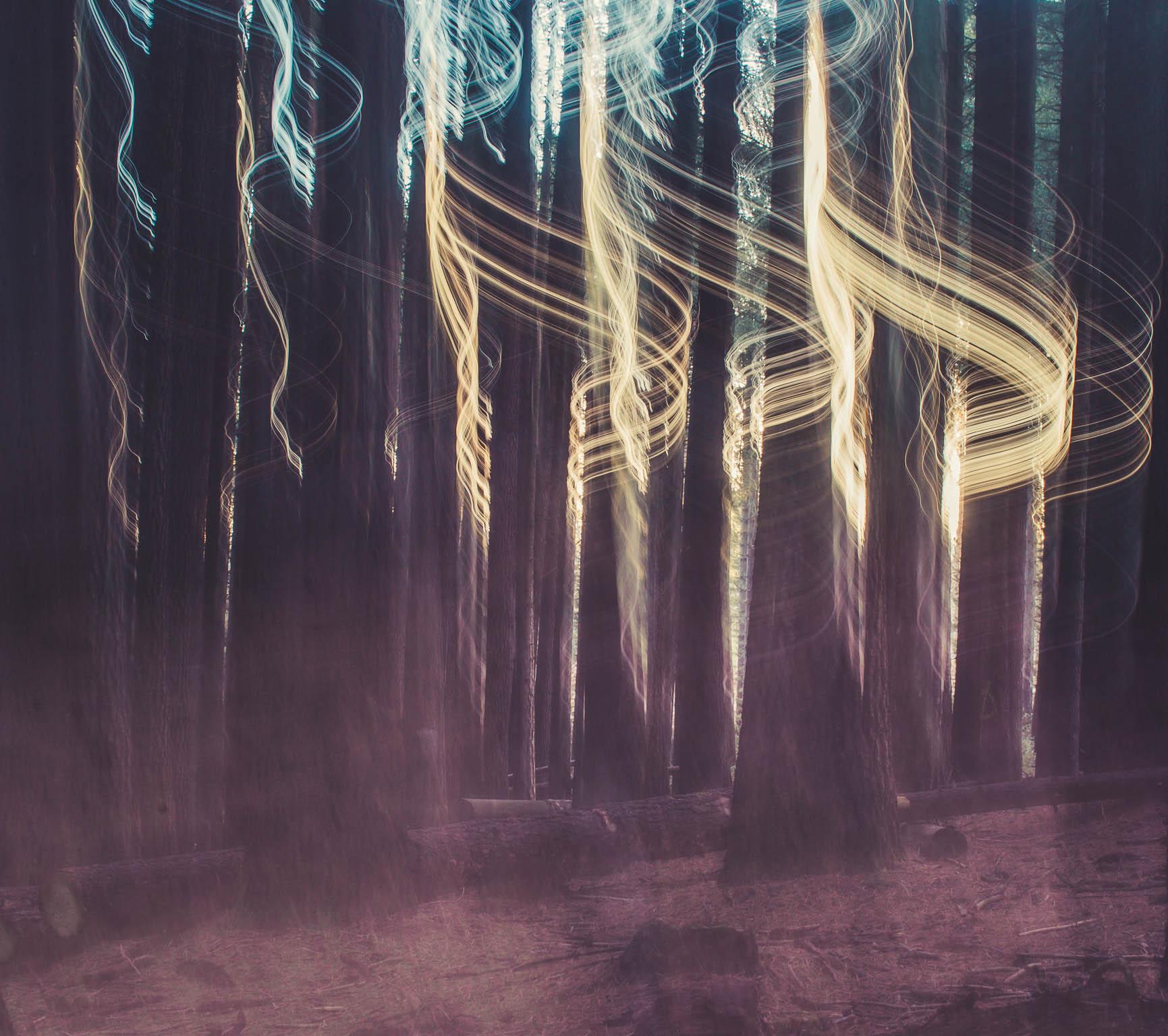 Sugar Pine Forest (5 of 11).jpg