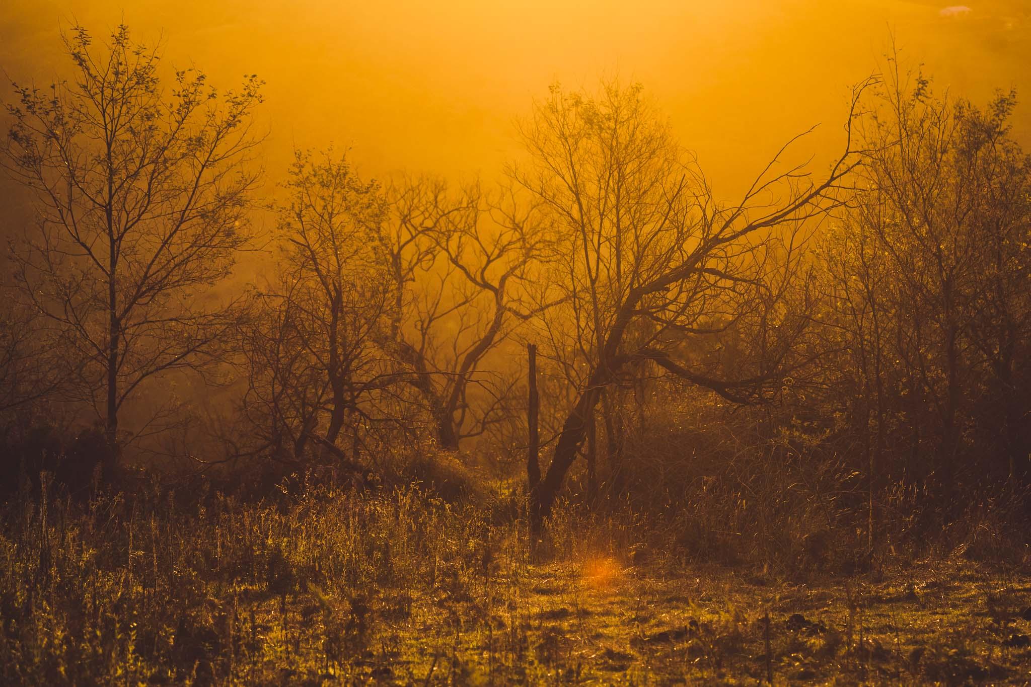 Sugar Pine Forest (27 of 33).jpg