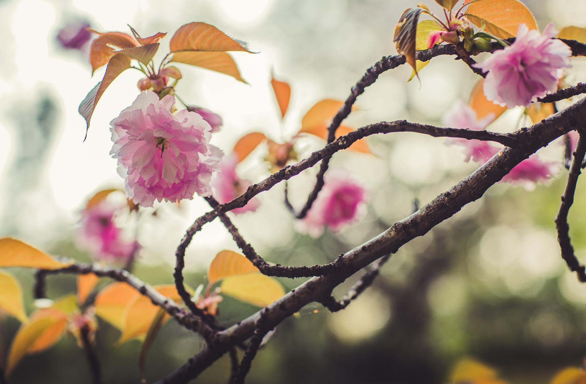 Kyoto Spring Day 1 (7 of 50).jpg