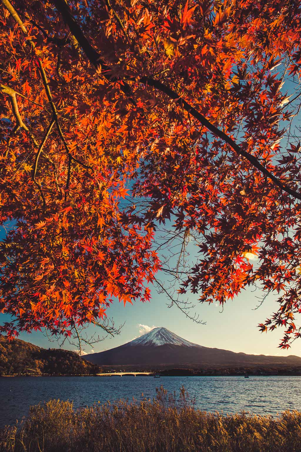 Japan Autumn Tour NOVember - Come experience Japan in Autumn! Dates: Nov 19th - 28th (10 days) Includes Monkeys in Hot Spring.USD $3999 (twin share)