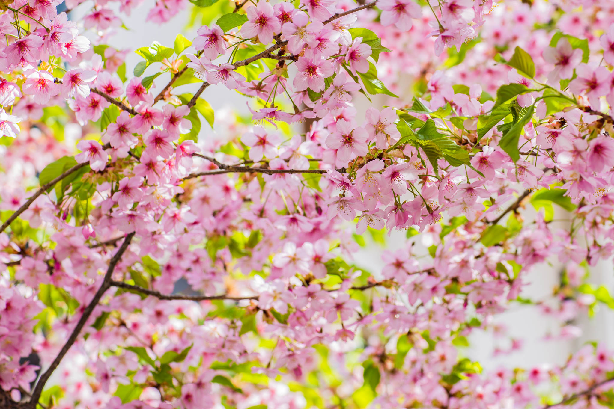 Japan Photo Tours Spring