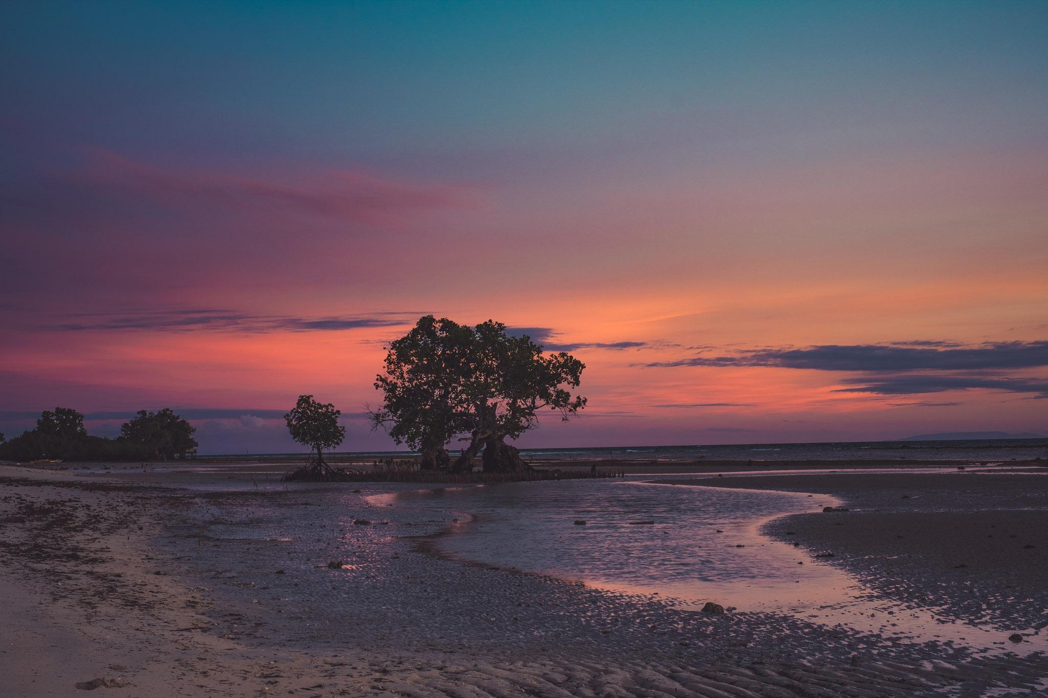Talingtin Sunrise with Mangrove Tree