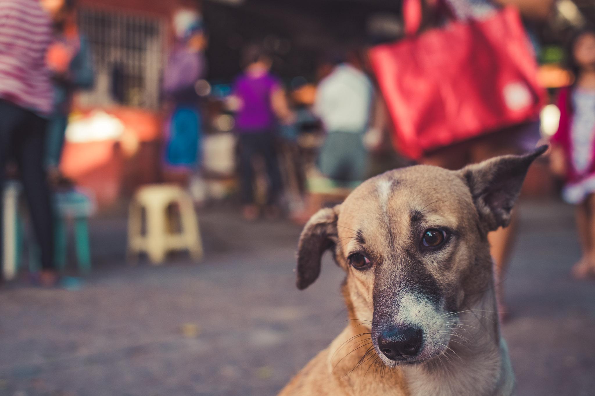 Sunday Market in Poblacion, San Jose