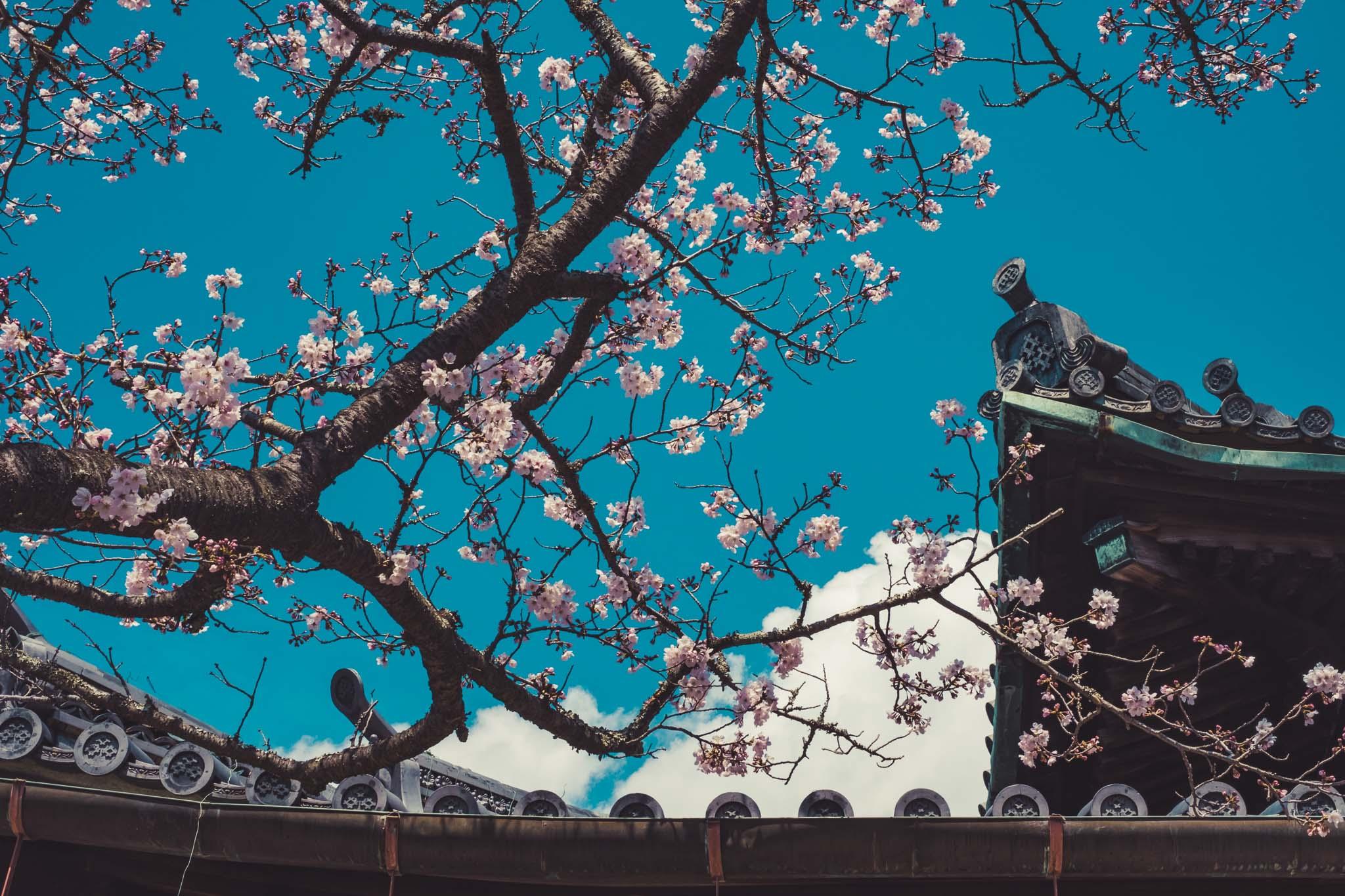 Kimidera Temple, Wakayama
