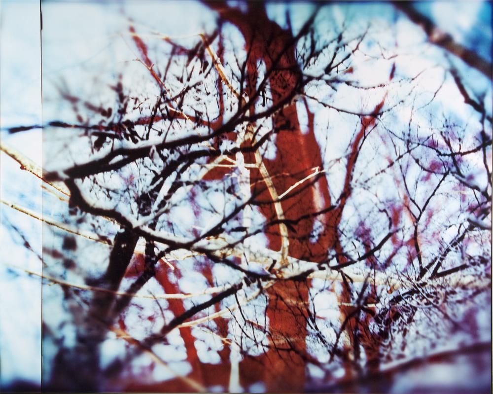 Tree_Panel_4.jpg