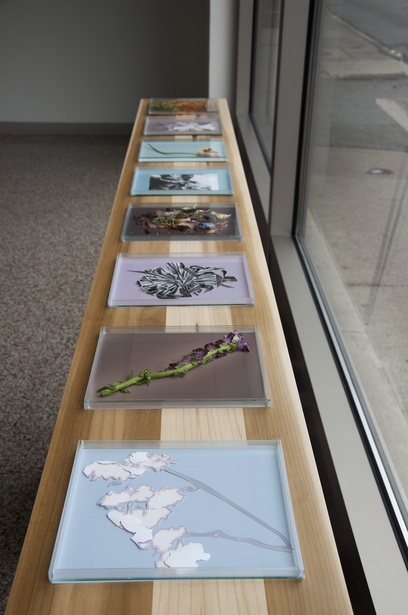 Installation View of In the Shadow of the Bloom