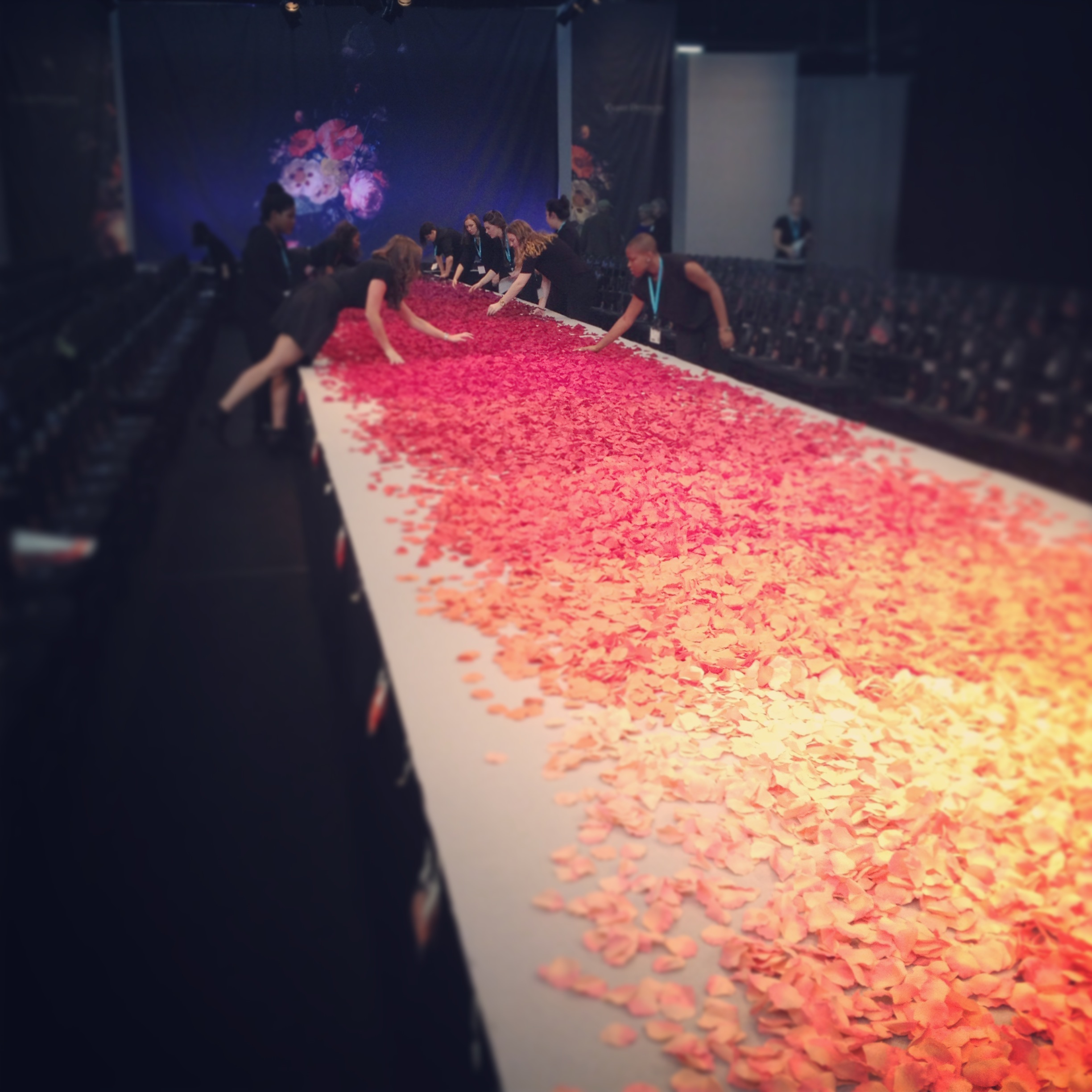 Ombre flower petals for the runway.