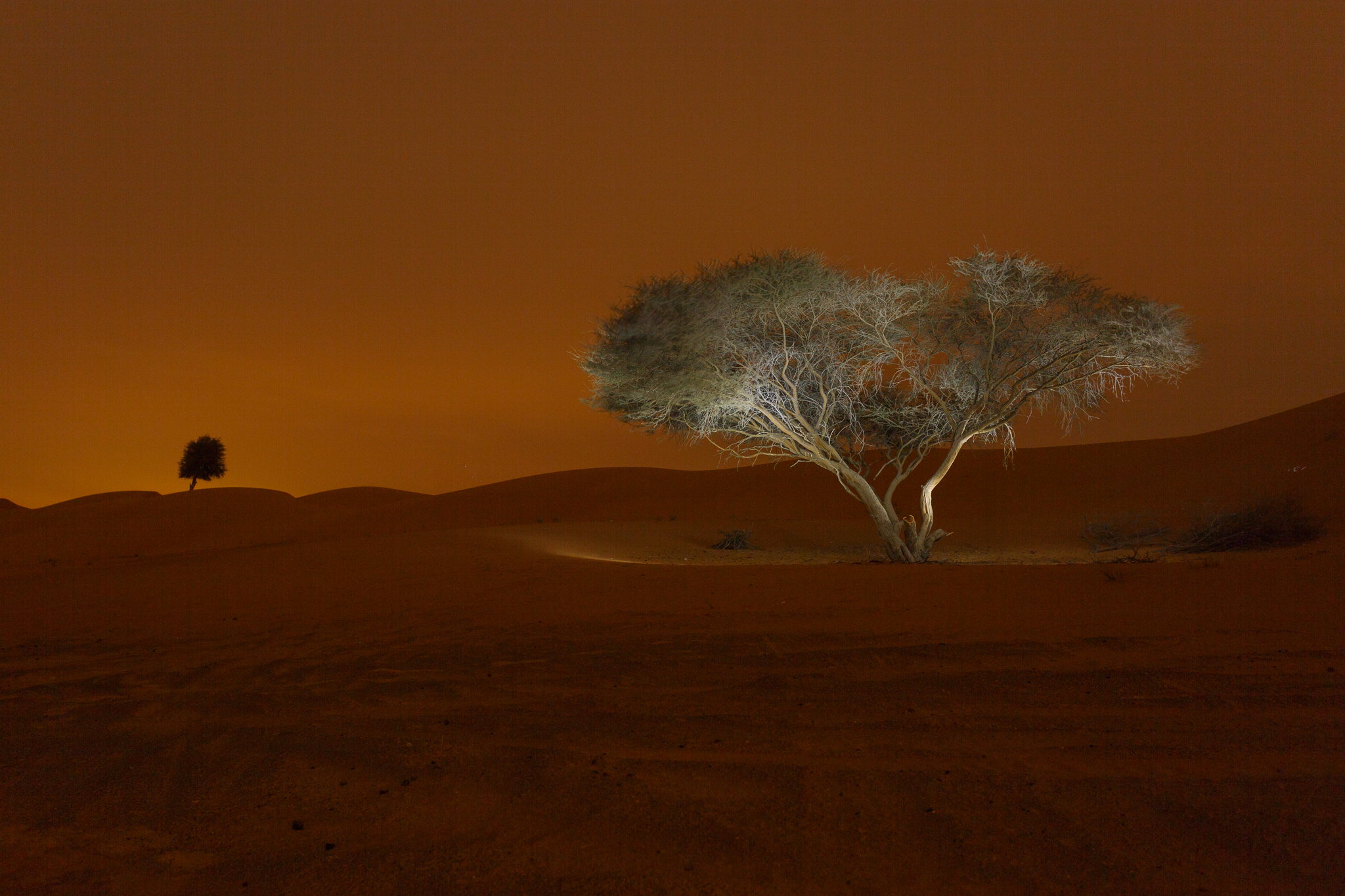 Light painted desert tree against Arabian desert backdrop