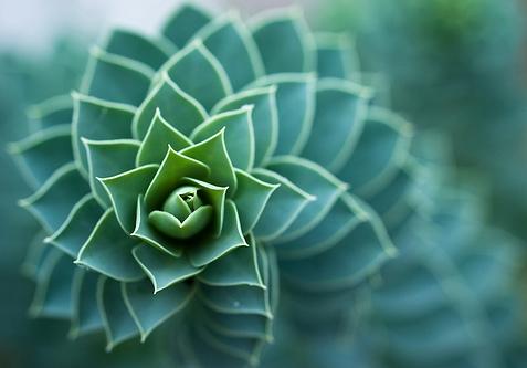 spiral.jpeg