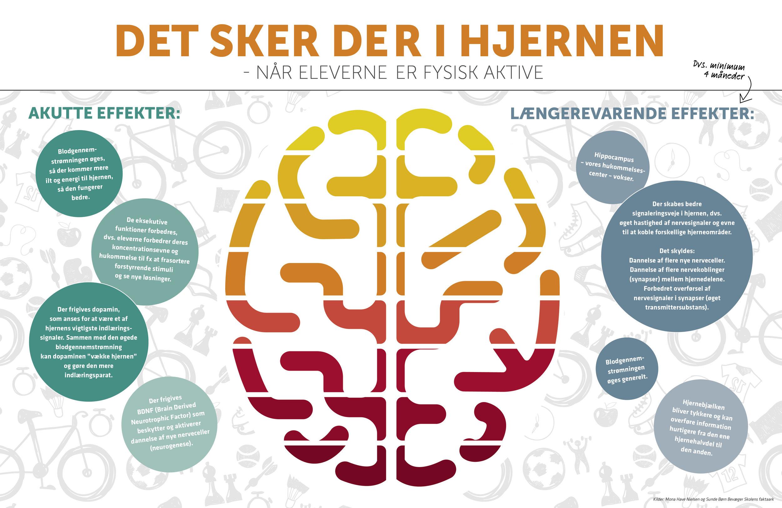 Illustration fra Idræt i Skolen om effekter i hjernen.