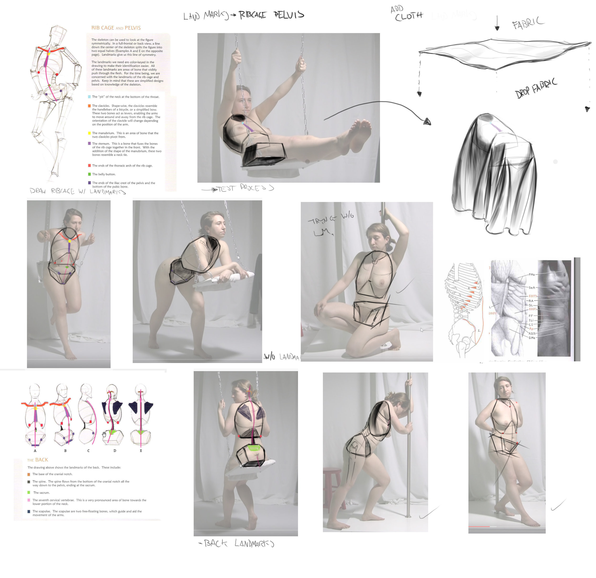 "Diagrams from Michael Hampton and ""Human Anatomy for Artists"" by Eliot Goldfinger"