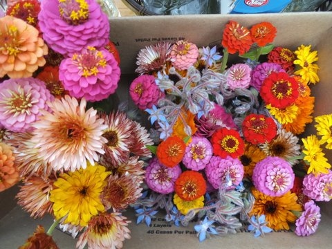 cut flowers.jpg