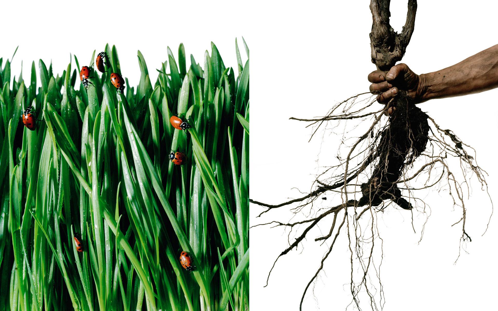 PR_grass-roots_sq.jpg