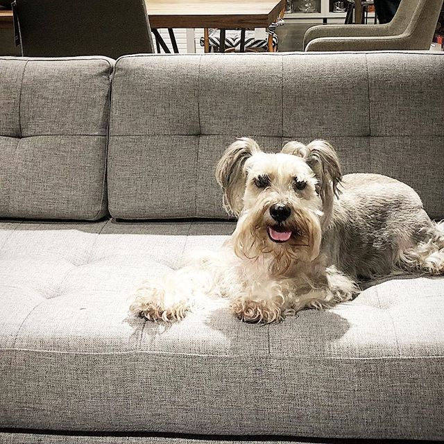 CHEAP & CHIC. Oscar and I are both digging this tufted gray flannel banquet at CB2. Great value, great looking.