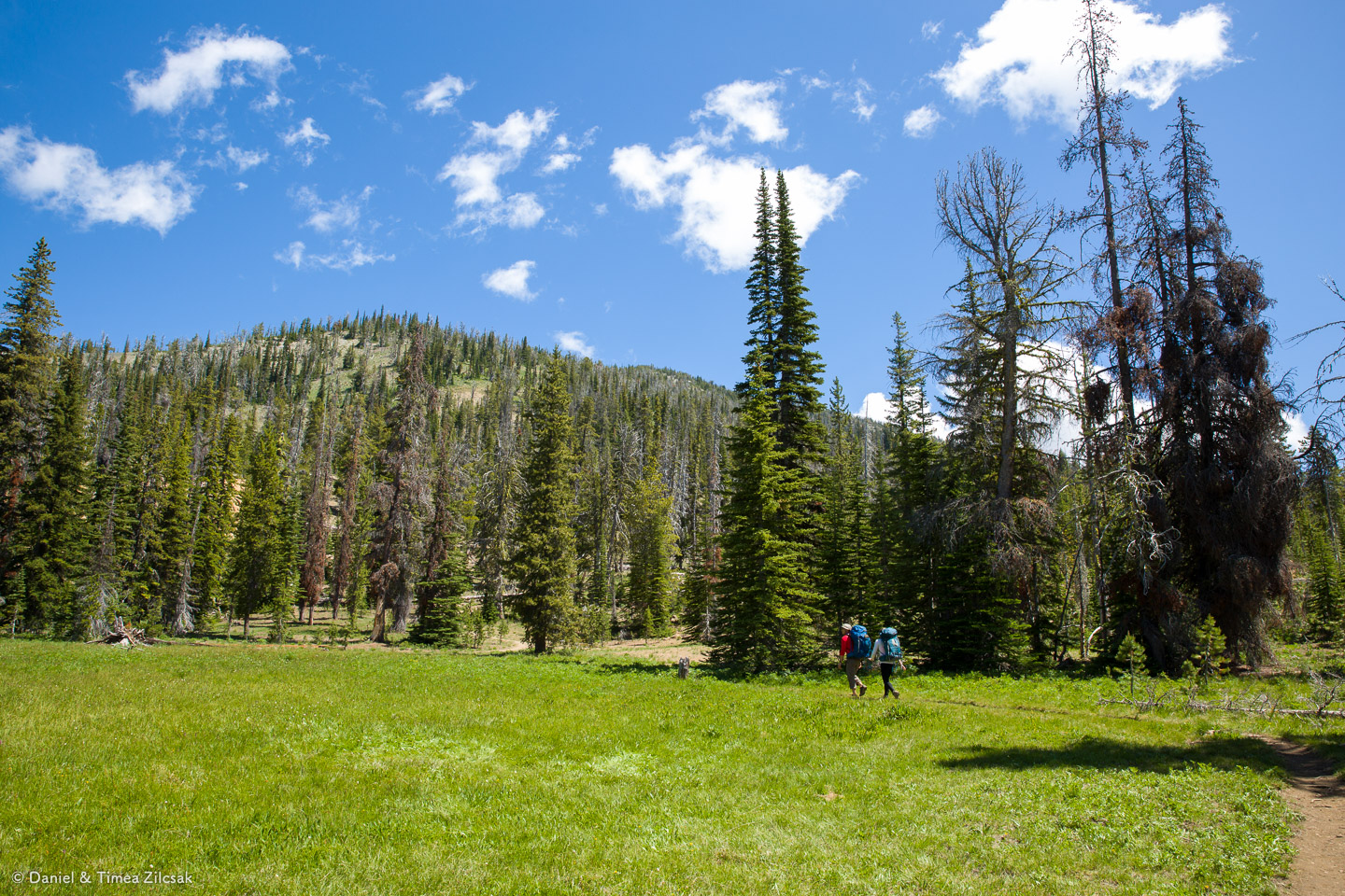 The meadows before Navaho Pass, offering plenty of camp spots for backpackers
