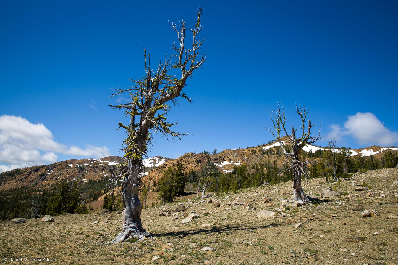Moon Landing area at Navaho Pass, off trail towards Earl Peak