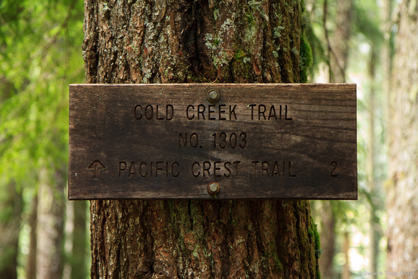 Cold Creek Trail No 1303, towards the PCT