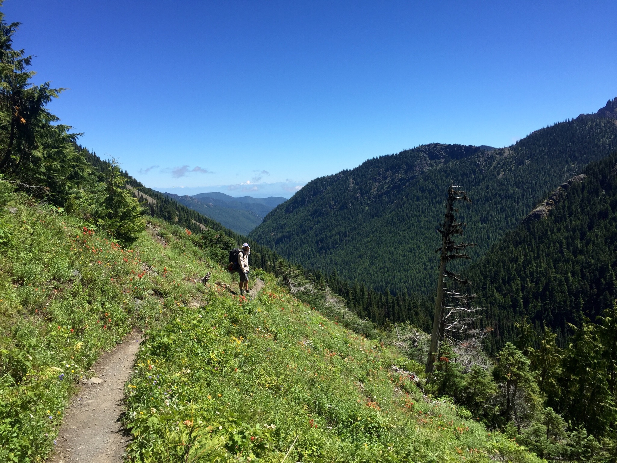 View of Big Quilcene Valley from the Marmot Pass trail