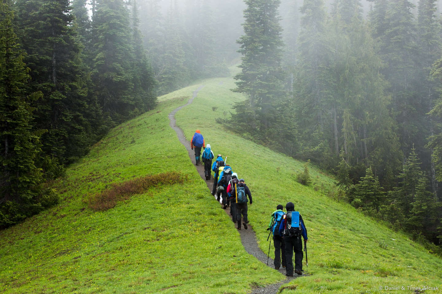 Our large group hiking back to Hurricane Ridge, after a successful Mount Angeles Summit