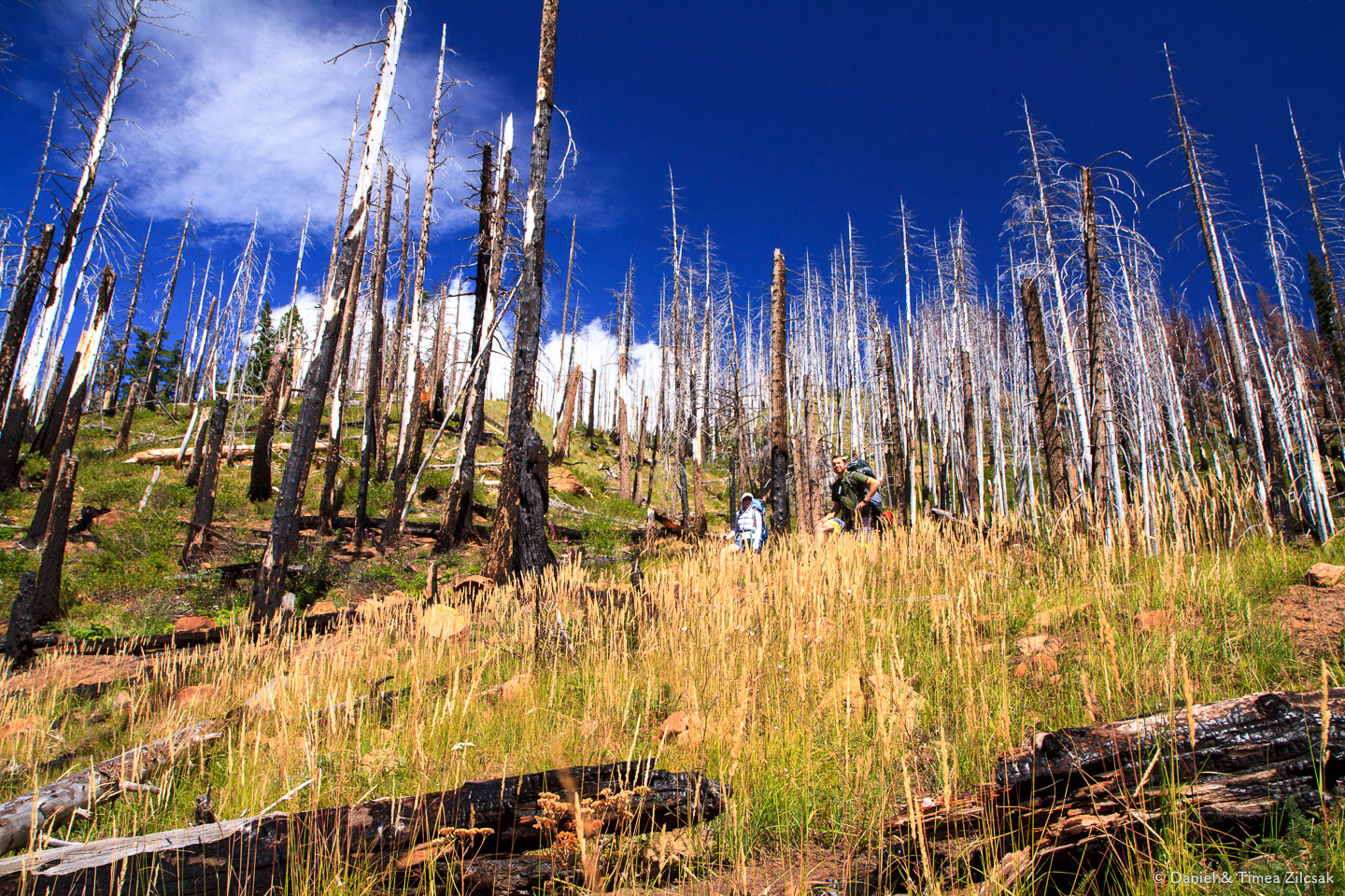 Higher up, more charred trees