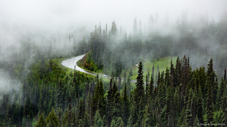 Road to Hurricane Ridge, Olympic National Park, Washington- 9Z4A1344 © Zilcsak.jpg