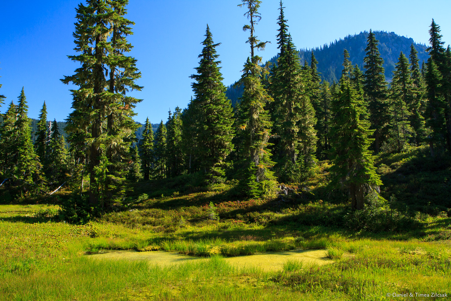 View from our camp at Lower Bridge Creek, Backpacking the High Divide - Seven Lakes Basin Loop, Olympic National Par