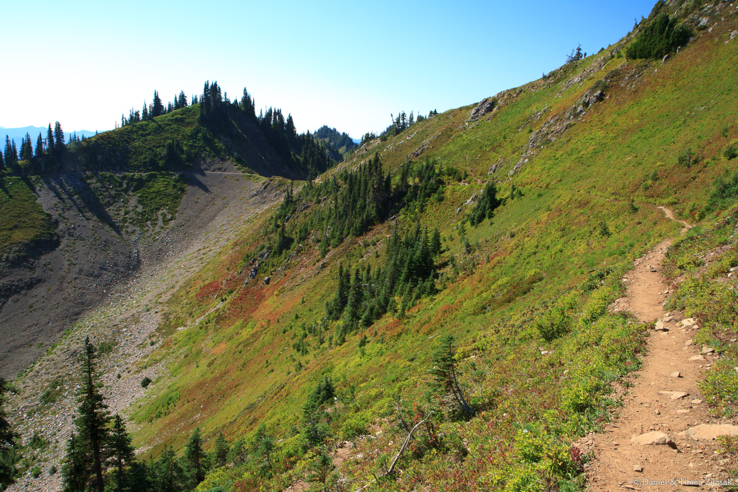 On the south side of Bogachiel Peak on the High Divide Trail, Ol