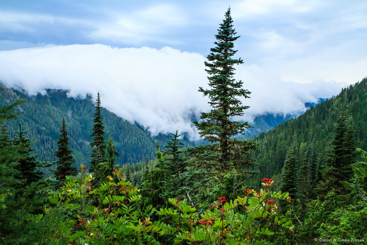 Storm chasing us across the High Divide Trail, Olympic National Park