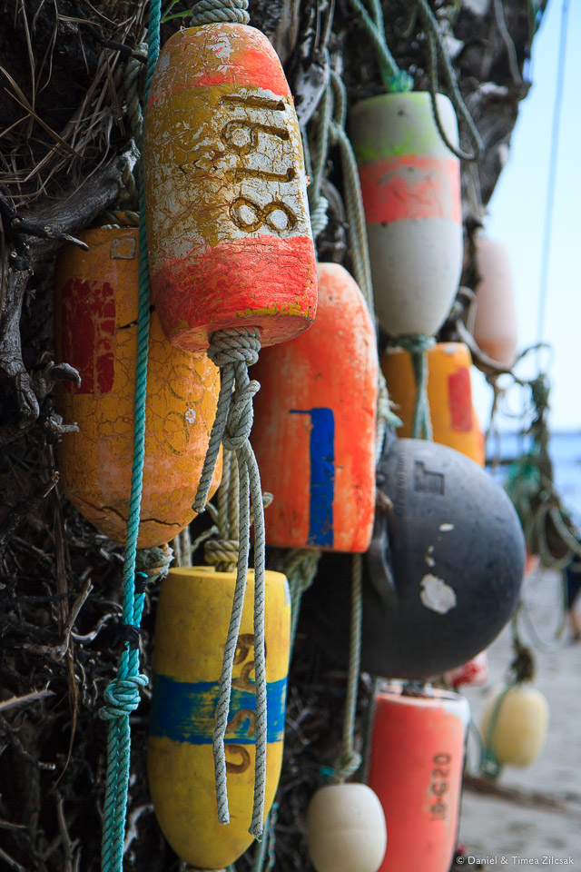 Scott Creek Camp decorated with colorful buoys on the South Coast Wilderness Trail, Olympic National Park