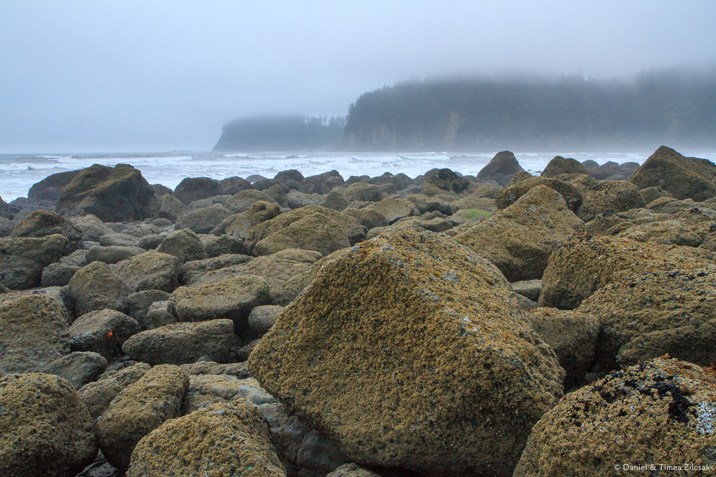 Morning fog at Jefferson Cove on the South Coast Wilderness Trai
