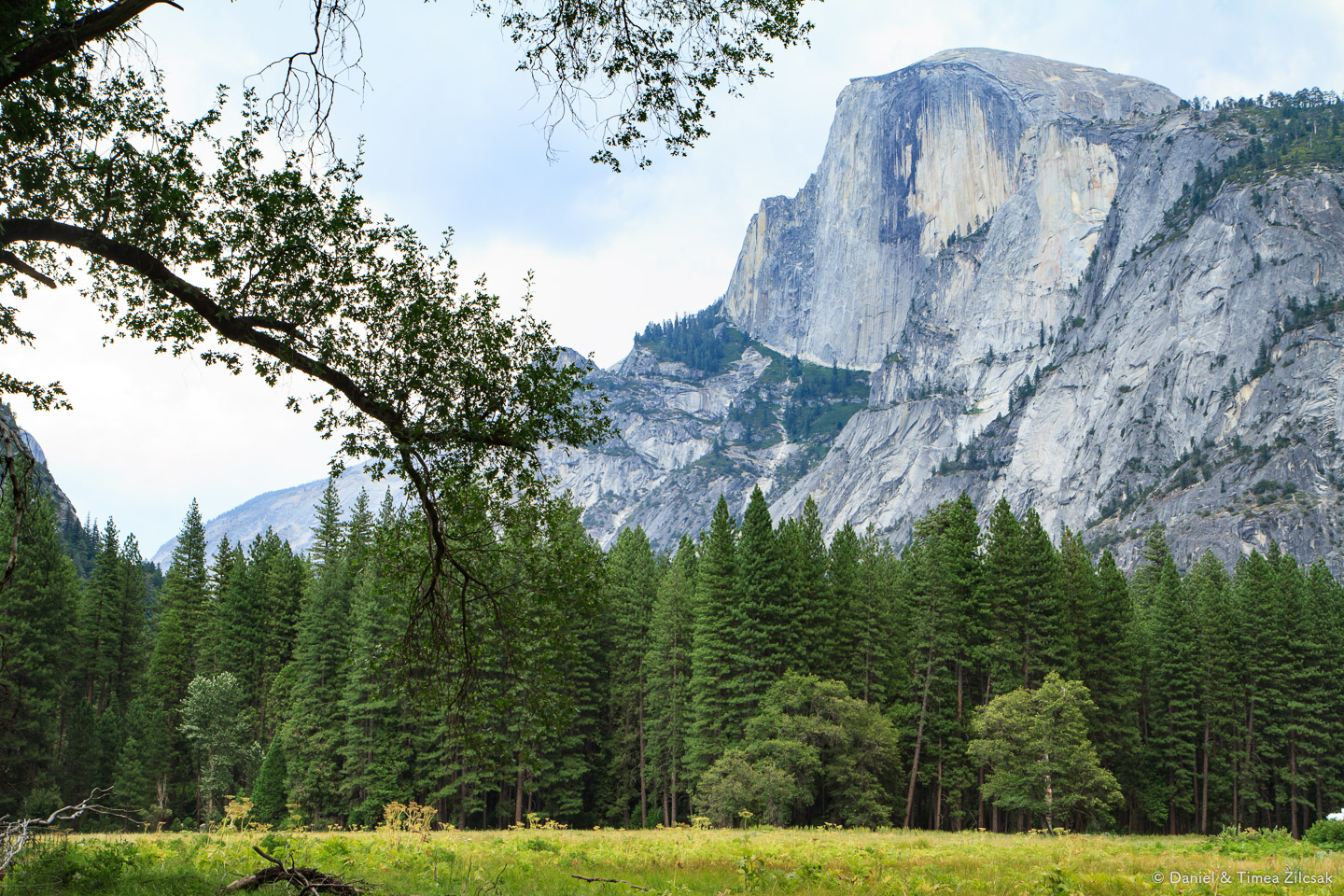 Half Dome view from Yosemite Valley