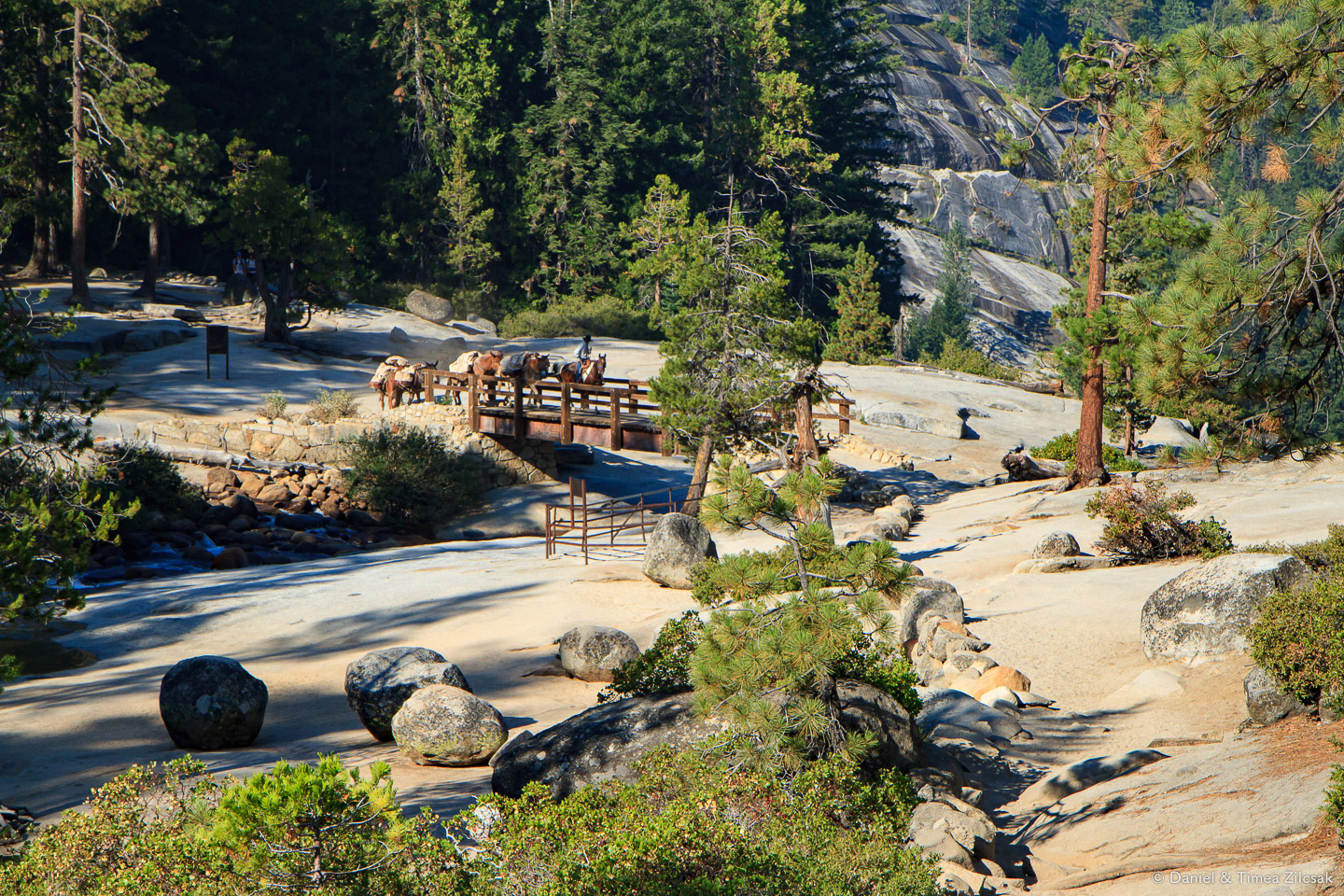 Mules carrying supplies for High Sierra Camps - Backpacking Yosemite National Park
