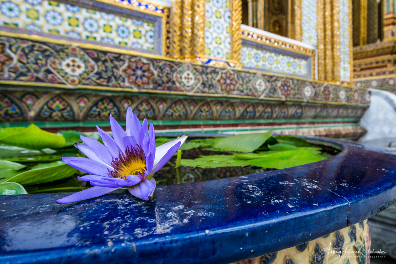 Lotus Flower in Pool at Wat Phra Kaew in Bangkok, Thailand