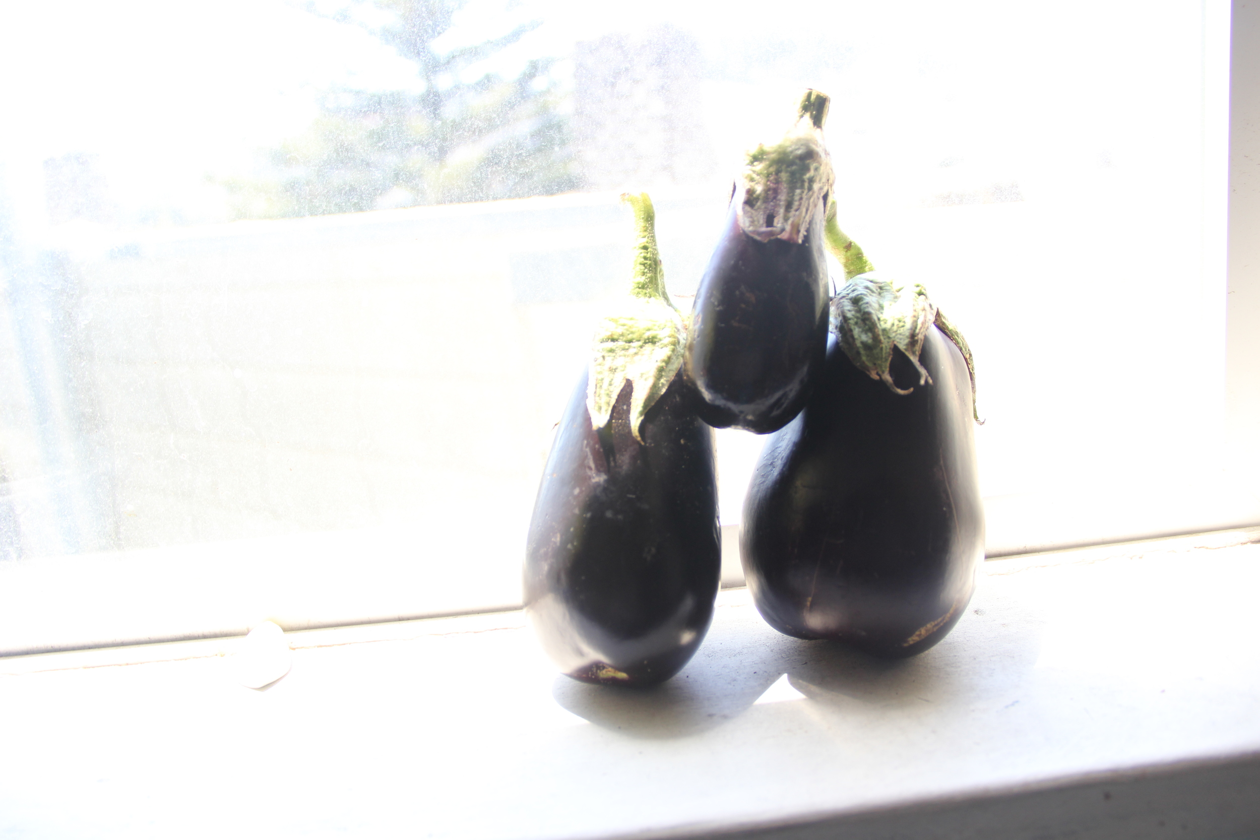 Eggplant, enjoying the San Francisco view.