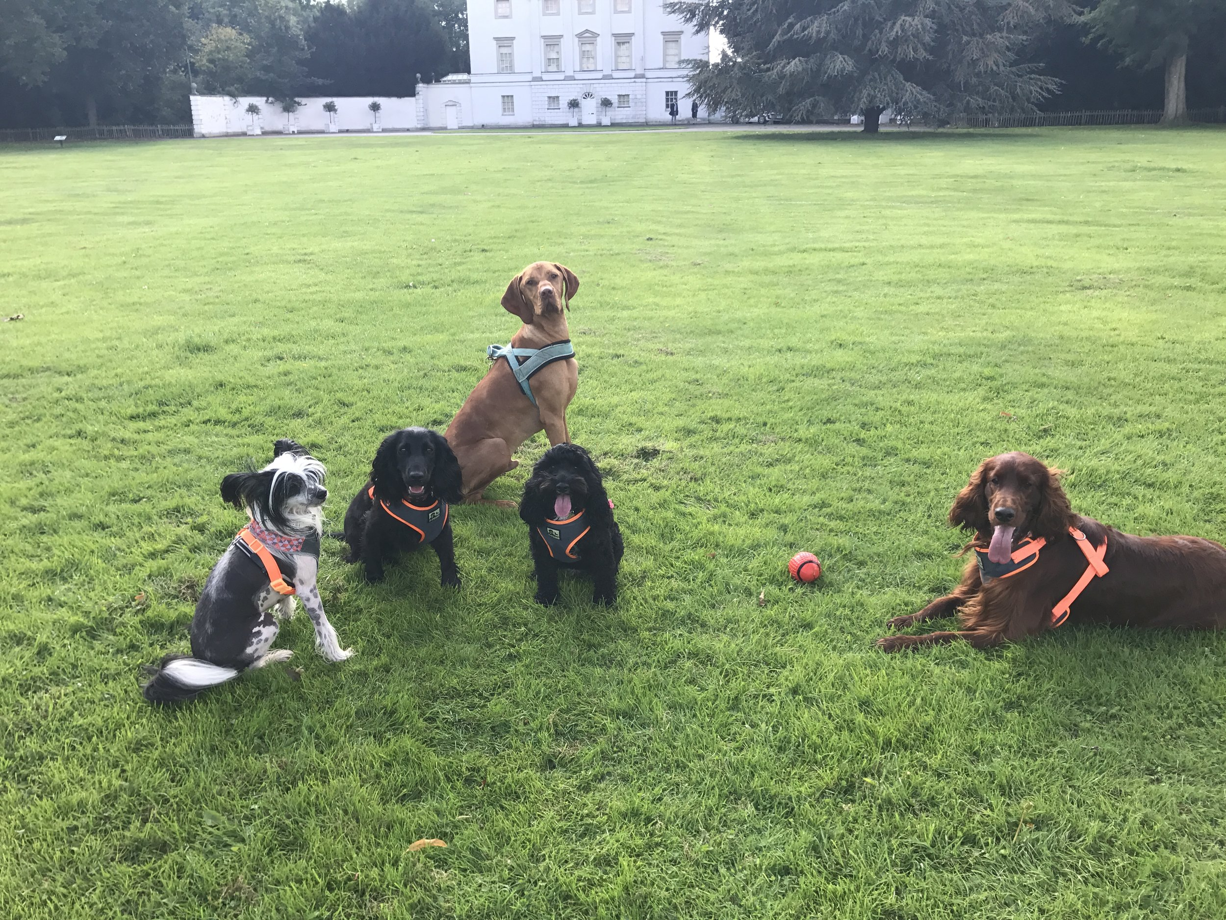 Having a breather in Marble Hill Park October 2017