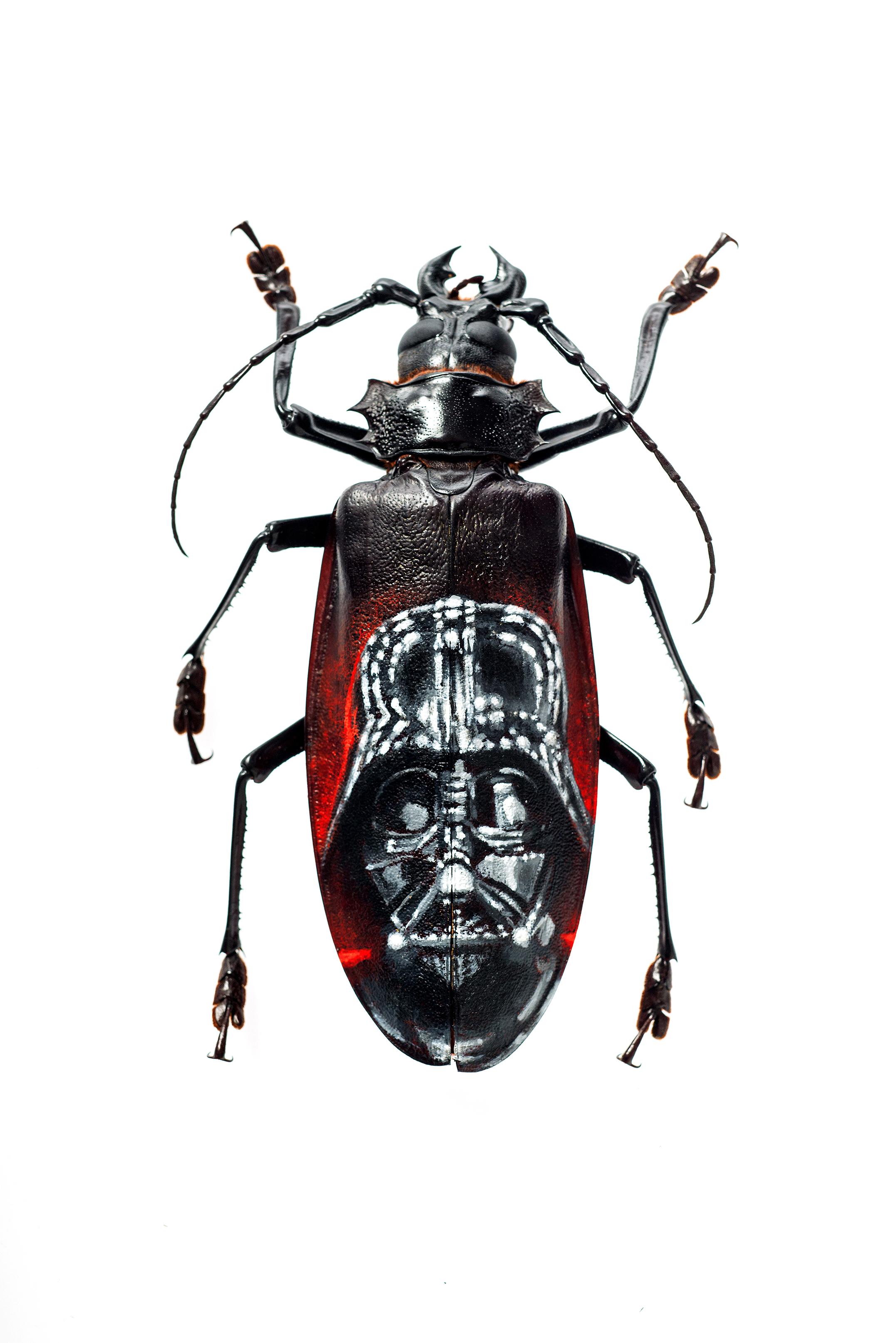 Evan Skrederstu.  Vader vs Titanus.  2015 – acrylic on beetle, 5.75″ x 2″.