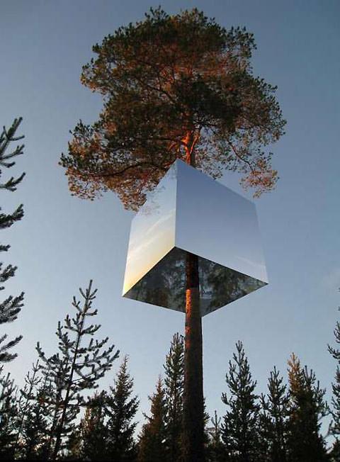 mirrortree.jpg