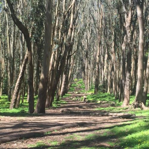 presidio-forest-bathing