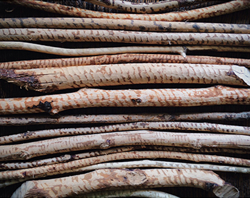 Here's a sampling of the beaver sticks I use for the arrows.  A beaver stick is a hand-collected stick that gets its texture from a beaver eating the bark for food. Each stick is unique in color and pattern. Most of my beaver sticks have been found in the NY area, but I have also collected some sticks from Oklahoma, Tennessee, Arkansas, and hopefully more states in the future!