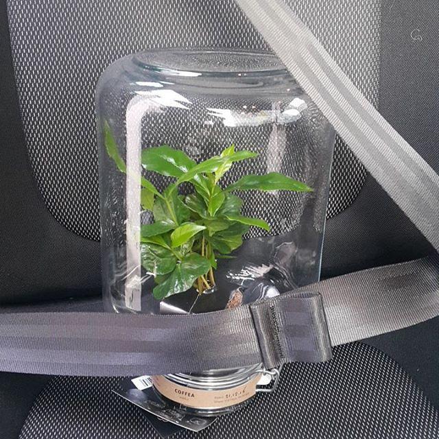Kavovec v steklenem kozarcu je super sopotnik, ki se ne pritožuje nad Vašo vožnjo -