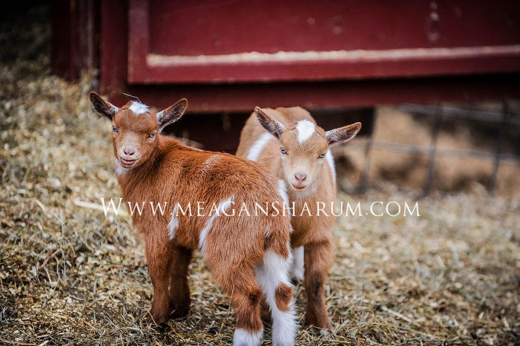 FarmPhotos-459.JPG
