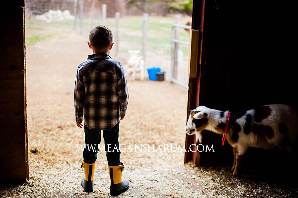FarmPhotos-6.jpg
