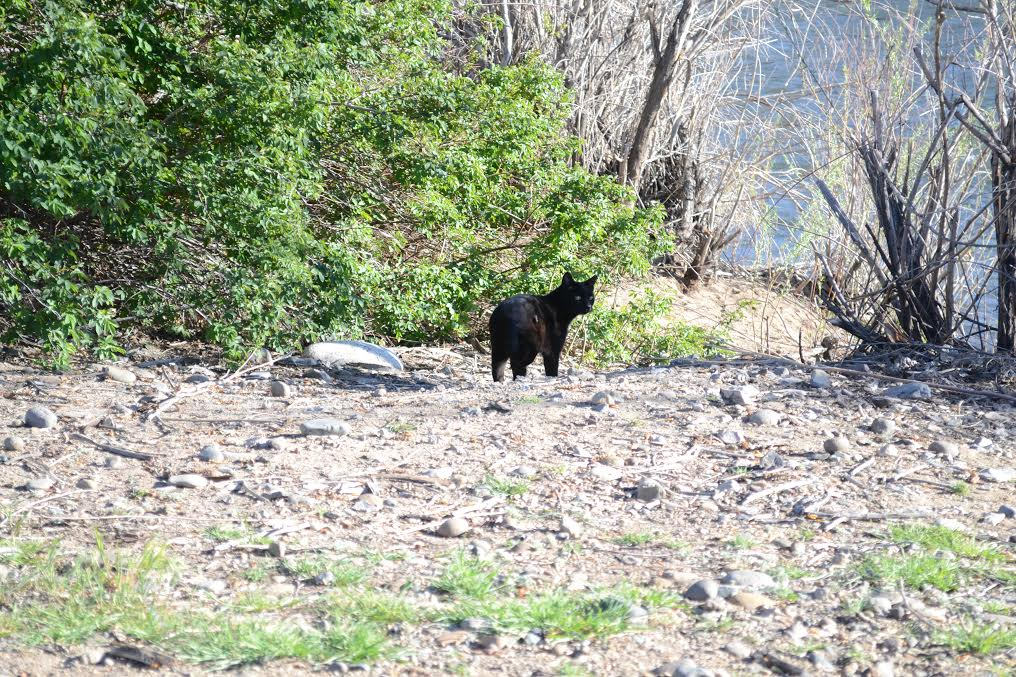A few cats also live in the area where homeless have been staying near the Truckee River and the Sparks/Reno line. photo by Jose Olivares