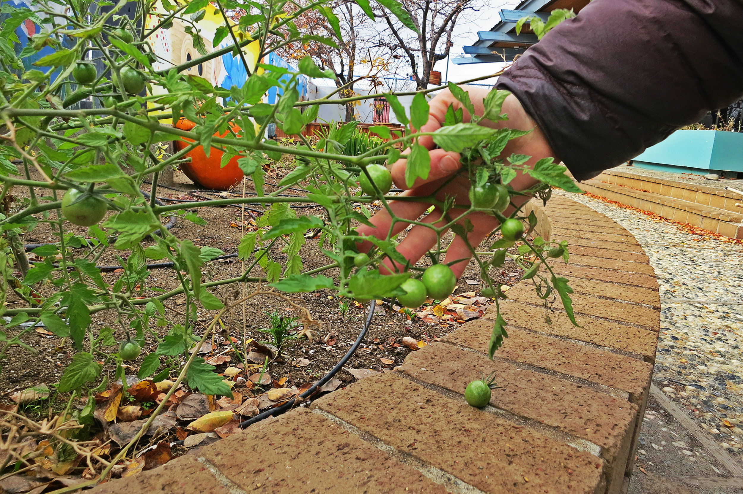 The High Desert Montessori School is one of many healthy food and community programs Stetson helps with.