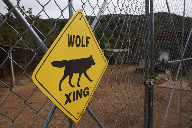 The U.S. Wolf Refuge, near Reno, only takes wolves born into captivity and currently houses 17 wolf dogs in five different enclosures. Photo by Alexandra Mosher