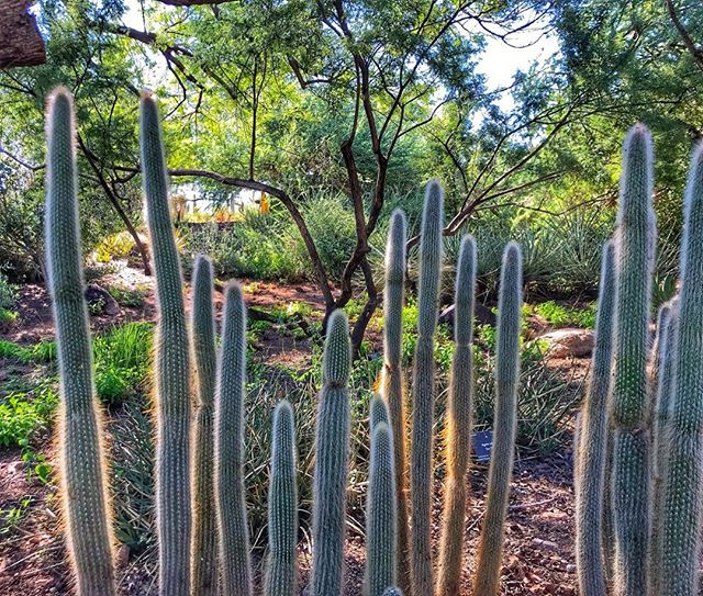 The desert in the spring is like a rainbow and the Desert Botanical Garden is such a colorful oasis this time of year. Get out there before it gets too hot! @dbgphx #flythenest #arizonaisbeautiful #beautyinthedesert