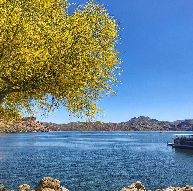 I have to say, this Spring has been pretty incredible for #Phoenix. Highs in the 70s in May is pretty unheard of, and we're sure not complaining. The #paloverdes blooming all over the city recently were stunning! All the sidewalks looked like the yellow brick road. This photo is from Saguaro Lake, about a 45-minute drive from the #tinyhouse and perfect day trip! You can rent a boat, or hang out at any of the picnic spots like Butcher Jones right on the water. If you're lucky, you might even catch a glimpse of the wild horses. Swipe for a photo by @grayewing. #arizonaisgorgeous #visitaz #tinyhouserental #makememories